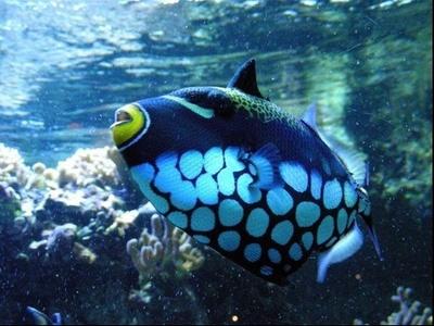Visite du Palais, de l'aquarium tropical ou du musée dès 4,50 € au Palais De La Porte Dorée