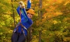 Camp Fortune  - Camp Fortune : C$49 for a Three-Hour Zipline Adventure for Two at Camp Fortune (Up to C$70 Value)