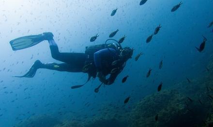 2 o 4 inmersiones de buceo para 1 persona en Buceo Pelicar (hasta 45% de descuento)