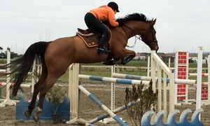 Centro Ippico Il Pesco Asd: 3 o 6 lezioni di equitazione con stage di etologia al Centro Ippico Il Pesco Asd (sconto fino a 68%)