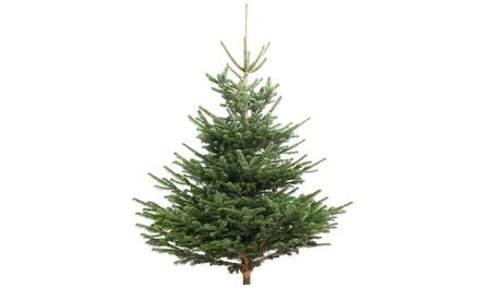 Albero di Natale XL Nordmann