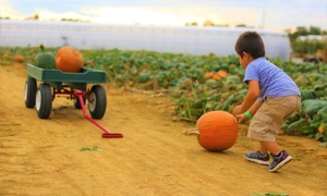 Up to 41% Off Single-Day Admission to Gritt's Farm at Gritt's Farm, plus 6.0% Cash Back from Ebates.