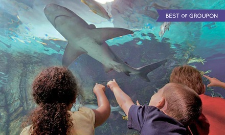 21 Off Newport Aquarium Newport Ky Groupon