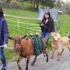 2 oder 3 Stunden Ziegen-Trekking