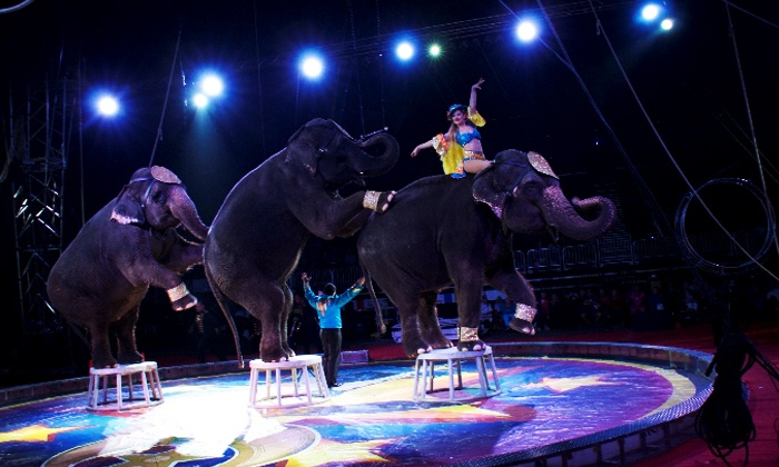 Circus Spectacular - Sears Centre: Circus Spectacular (February 12–14)
