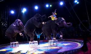 2016 Carden Super Spectacular: Carden International Circus on May 30 or May 31 at 4 p.m. or 7:30 p.m.