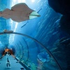 Dubai Mall Aquarium Tour
