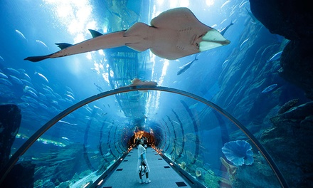 Dubai Mall Underwater Zoo and Aquarium Entry with Optional Dubai City Tour with Baisan Travel (Up to 30% Off)