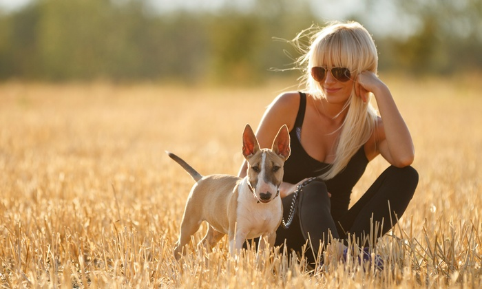 Windy Walkers Pet Care - Multiple Locations: $1 for a 10-Minute Walk ($2 Value) — Windy Walkers Pet Care