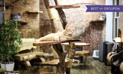 image for London Cat Village Entry with a Drink and Slice of Cake for Two (Up to 25% Off)