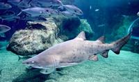 Entrada para visitar el acuario para niños y adultos desde 10 € en Aquarium Roquetas de Mar