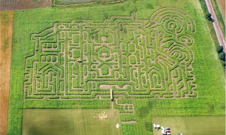 Thornton Abbey Maize Maze