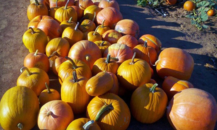 Corona Pumpkin Farm - Lake Mathews Area: Visit for Two Monday–Thursday, or a Visit for Three or a Family Friday–Sunday at Corona Pumpkin Farm (Half Off)