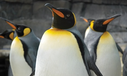 One Child, Adult, or Family Pack of Annual Passes to Newport Aquarium (Up to 41% Off)