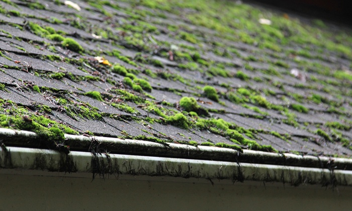 CWAGS: Roof Moss Treatment Or Moss Removal With Gutter Cleaning From CWAGS  (Up To