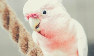 Akademia Papug – Papugarnia Warszawa: Od 10,99 zł: bilet do papugarni Akademia Papug