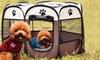 Box pop-up per cani di piccola taglia