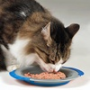 Easy Meal Cat Dish