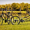 Up to 53% Off Tastings from Vintage Bicycle Tours