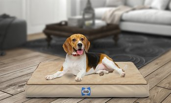 Sealy Orthopedic Dog Bed