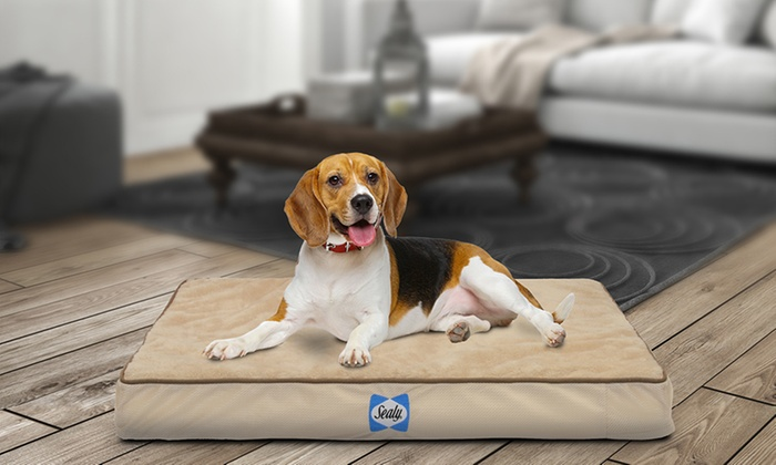 50% Off on Sealy Orthopedic Dog Bed | LivingSocial Shop