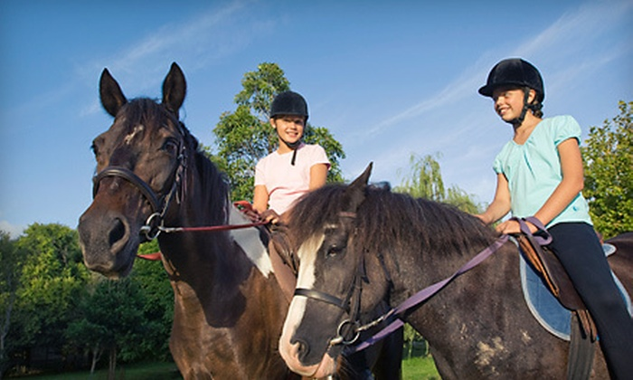 Tribeca Equestrian - Pitt Meadows: One, Three, or Five Group Horseback-Riding Lessons at Tribeca Equestrian (Up to 59% Off)