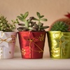 Decorative Holiday Succulent Party (Set of 3)