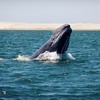 Up to 57% Off Whale-Watching Tour