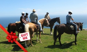 Coastal Views Horse Treks: Two-Hour Horse Riding Trek for One ($69), Two ($135) or Four People ($269) with Coastal Views Horse Treks (Up to $360)