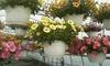 Fresh Pick Market - Oak Lawn: Flower Baskets or Flower or Veggie Packs at Fresh Pick Market