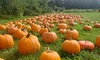 Up to 35% Off Corn Maze Packages at Scotts Yankee Farmer