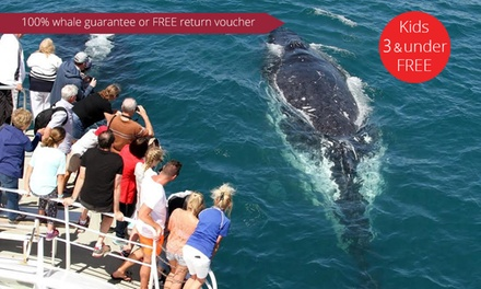 2.5-Hour Whale Watching Tour for One Child ($39) or Four Adults ($209) on Spirit of Gold Coast (Up to $456 Value)