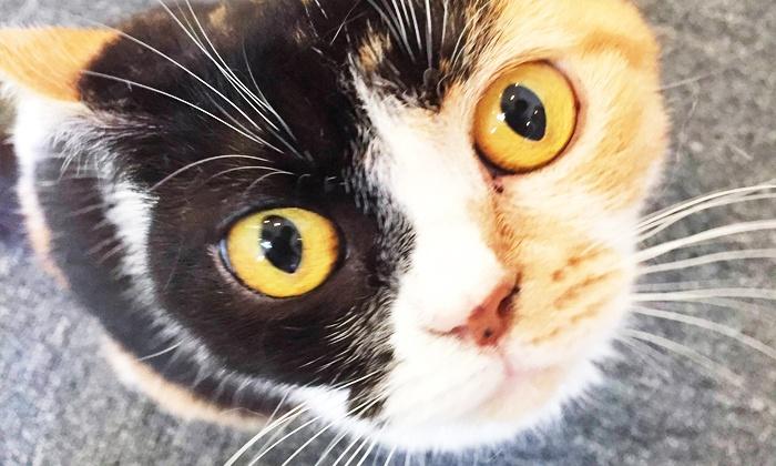保護猫カフェ - 中央区: かわいい猫ちゃん達とふれあえる。里親をお考えの方にも≪猫カフェ(ドリンク付)/1時間コース or 2時間コース≫ @保護猫カフェ