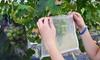 Garden Protect Netting Bag