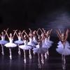 """Swan Lake"" – Up to 52% Off Ballet"