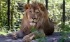 Blank Park Zoo - Des Moines: After-Hours Zoo Brew with Live Music for 2, 4, 6, or 10 at Blank Park Zoo (Up to 57% Off)