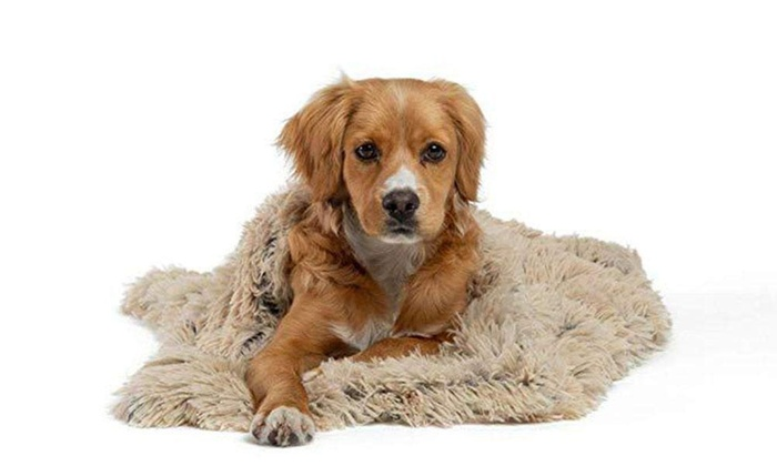 Plush Shaggy Pet Blanket