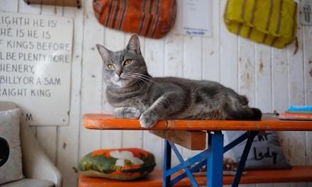 Darling Darlings Cat Lounge