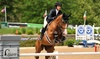 Up to 47% Off Private Horseback-Riding Lessons