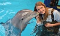 """Formule """"Dans leau avec des dauphins"""" au Seapark Boudewijn"""