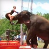 LuLu Shrine Circus – Up to 52% Off Performance