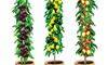 Fruitiers 100% bio