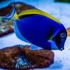 10% Off Aquarium Supplies