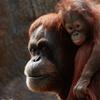 Up to 47% Off at Zoo Atlanta