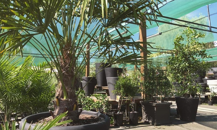 California Classics Exotic Plant Company - South East Kelowna: Exotic Trees and Plants at California Classics Exotic Plant Company (Up to 54% Off). Two Options Available.