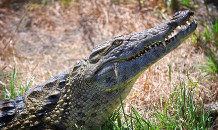 $12 for a Crocodile Tour for Two at Crocodile Encounter (Up to $23.90 Value)
