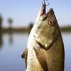 50% Off a Fishing Trip