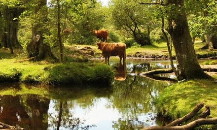 New Forest: 1 or 2 Nights for Two with Breakfast and Options for Dinner and Prosecco at Ormonde House Hotel