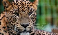Entrada al zoo de Santillana del Mar hasta para 2 adultos y 4 niños desde 6,95 €
