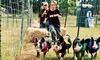 Hunter Cattle Farm - Nevils-Stilson: $9 for The Farm Heritage Day Festival for Two on September 20 at Hunter Cattle Farm ($18 Value)